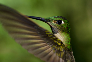 The Hummingbird Algorithm has forever changed face of SEO.